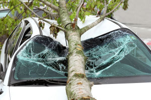 emergency tree removal situation with a tree landing on a vehicle