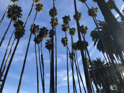 newport beach blue sky with tall palm trees
