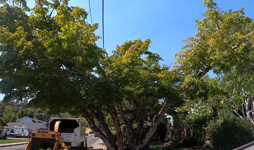 crane working on a tree removal job in newport beach ca